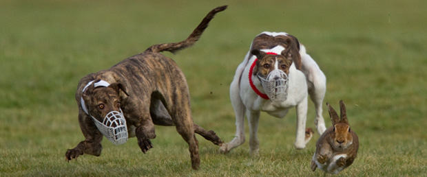 contact-icc-coursing