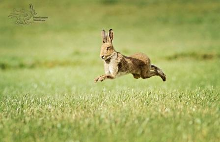 Hare Pic