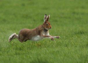 Hare Photo