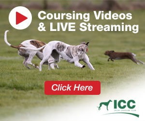 Coursing Videos & Live Streaming